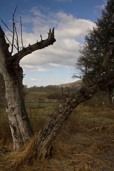 The hanging tree.