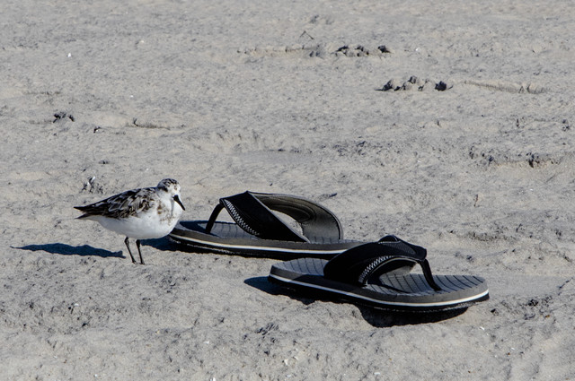 Excuse me; those are my flip-flops.
